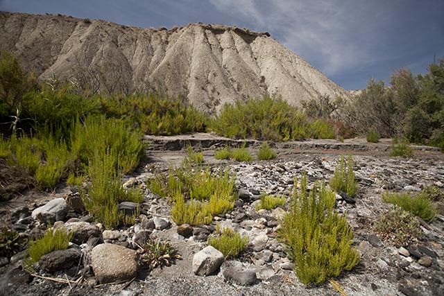 Trails desierto de Tabernas