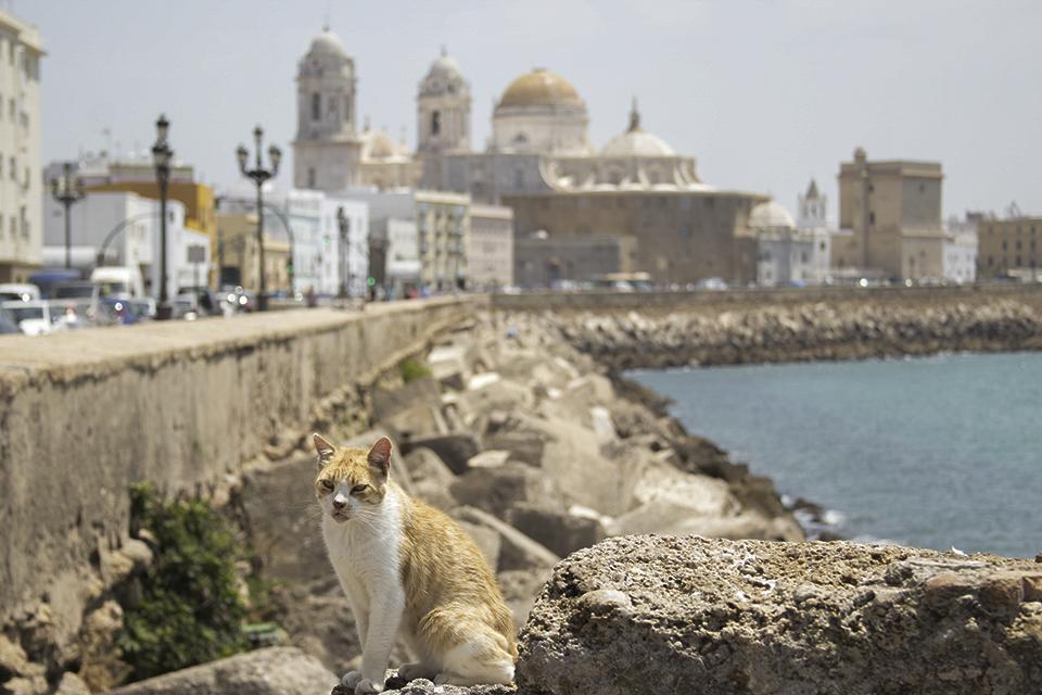 Catedral de Cádiz Te cuento de viajes