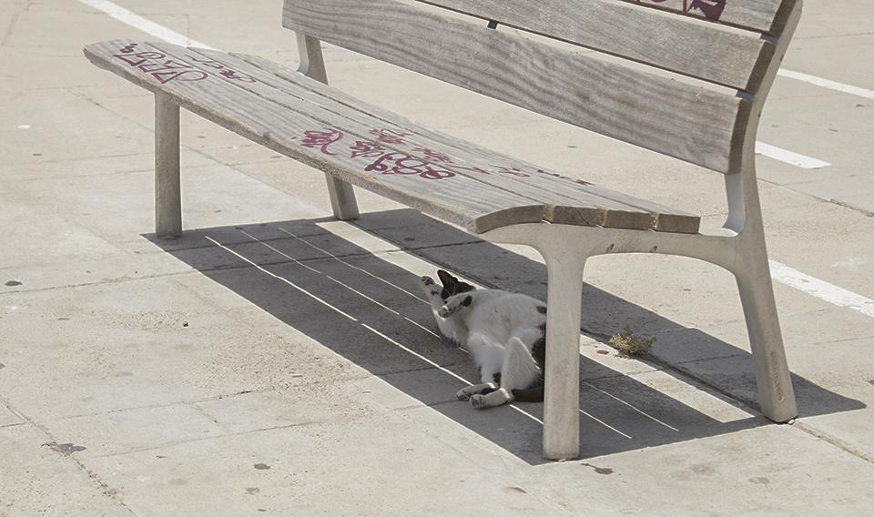 gatos en Cádiz malecón Te cuento de viajes
