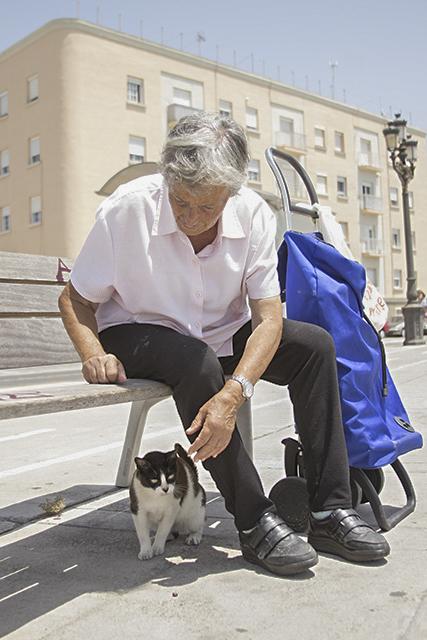 fotografía gatos callejeros Cádiz