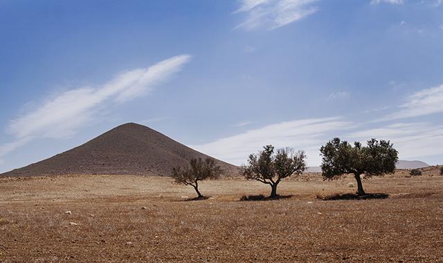 olivos en Almería almazaras en Tabernas
