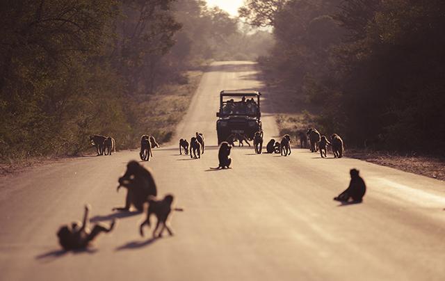 estado carreteras Kruger National park