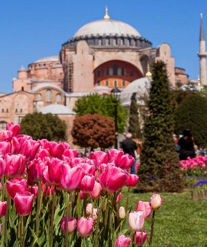 Hagia sofia estambul tulipanes festival