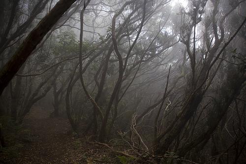 bosque de niebla en la Gomera