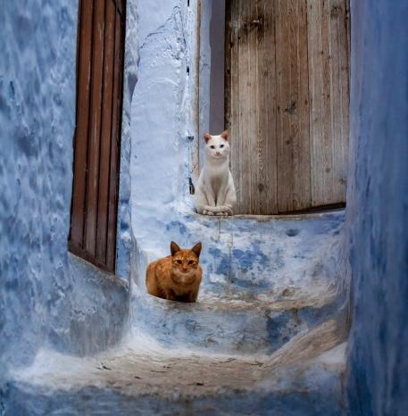 chaouen cats