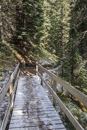 wilcox pass trail