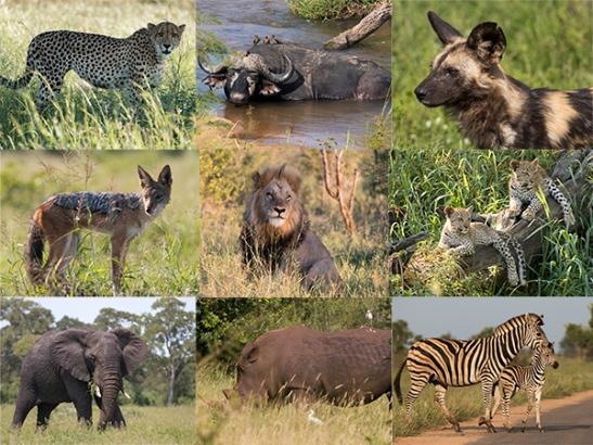 Big five Kruger National Park, Sudáfrica Te cuento de viajes