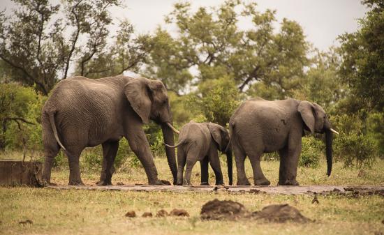 elefantes en Kruger National Park, Sudáfrica