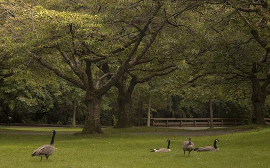 Visitar Stanley Park en Vancouver (Canadá)