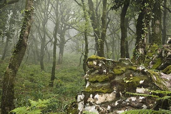 Bosque de niebla Parque Naturales de Los Alcornocales Algeciras Cádiz