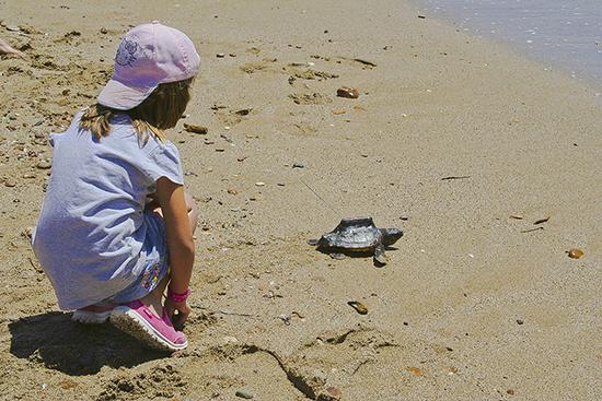 Suelta de Tortugas en playa de Almería