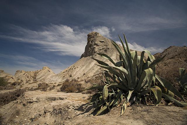 cuando visitar el desierto de Tabernas