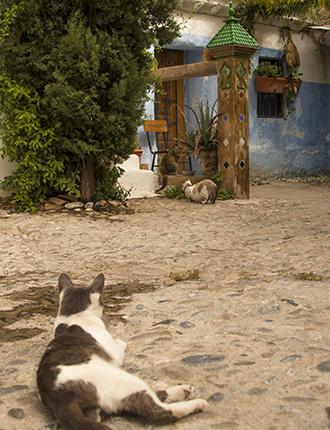 gatos en un rincón del barrio del albaicín granada