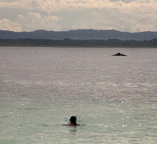escuchar las ballenas en Azuero, panamá