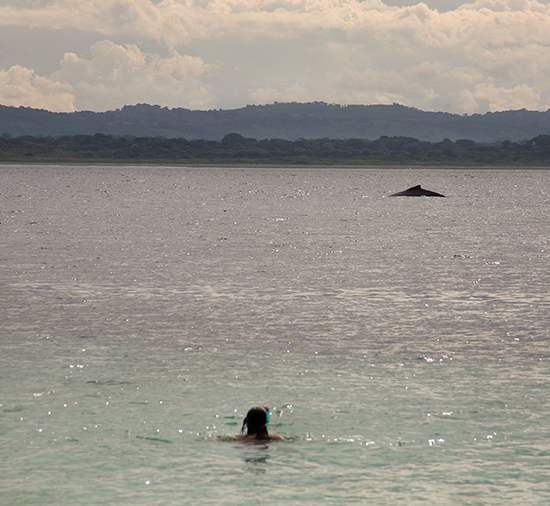 ver ballenas en Panamá