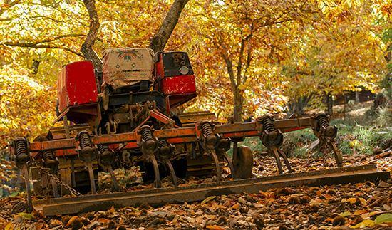 trabajos forestales en un castañar