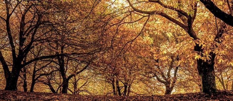 Panorama_11 copia