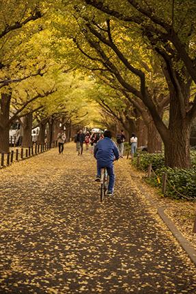 Avenida de los ginkgos Tokio