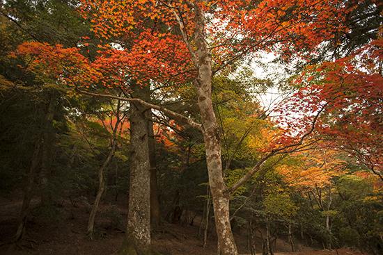 bosques en Japón