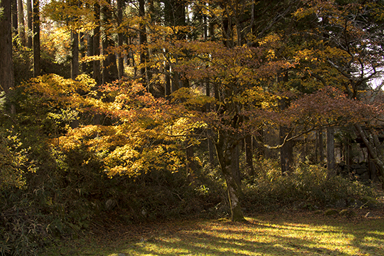 otoño en Japón