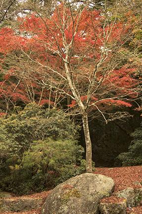 viajar a Japon en otoño