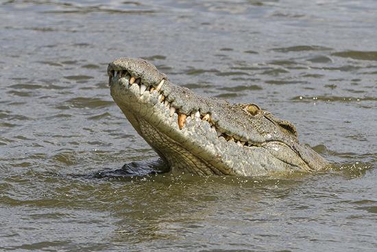 ver cocodrilos en Kruger National Park