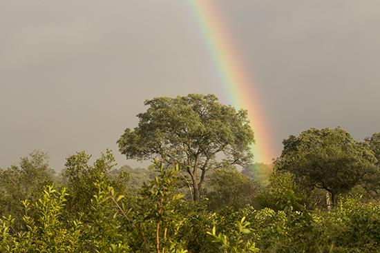 arcoiris en Kruger National Park Sudafrica