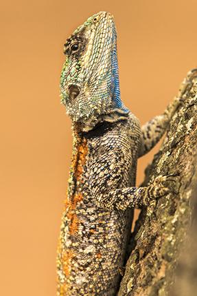 ver fauna en los campamentos de Kruger National Park Sudafrica