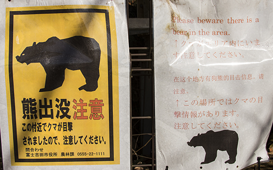 osos en Japón