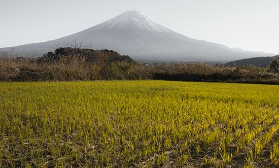 Arrozal y vistas del Fuji Japón Kawaguchiko Lake