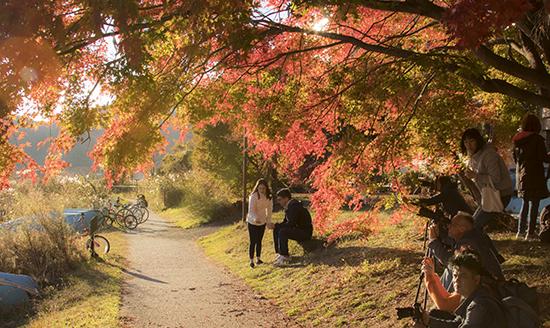 corredor momiji Fuji Japón