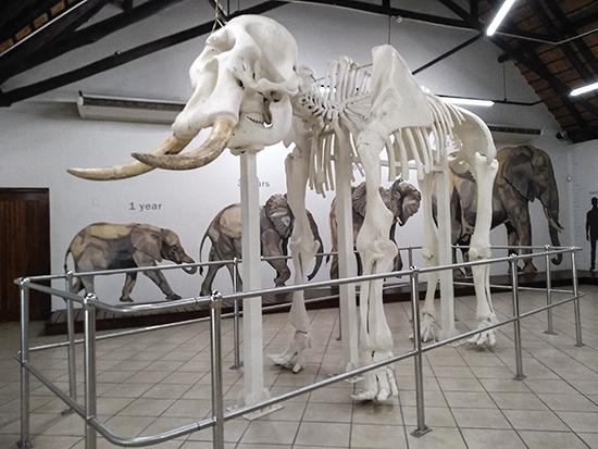 Que ver en Kruger N.P museo Letaba camp
