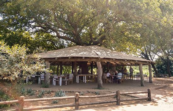 Tshokwane picnic area Kruger Sudafrica