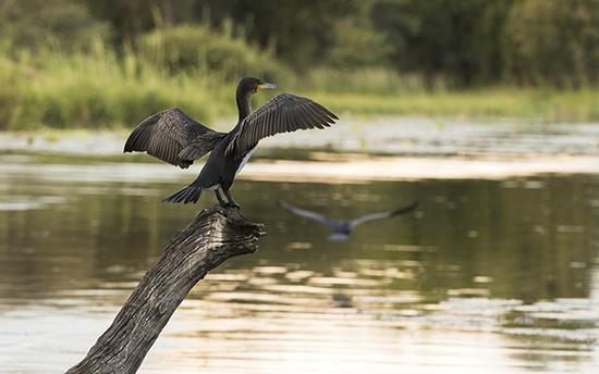 aves en Kruger N. P birdhides