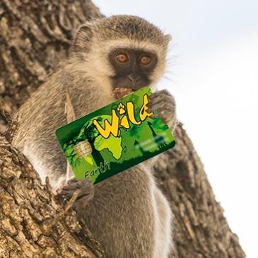 wild card kruger N.P parques sudafricanos