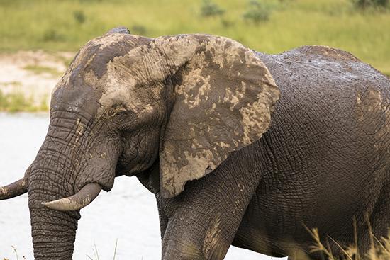 elephants in Kruger Sudafrica