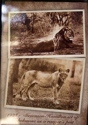 decoración Tshokwane pincic area Kruger Sudafrica