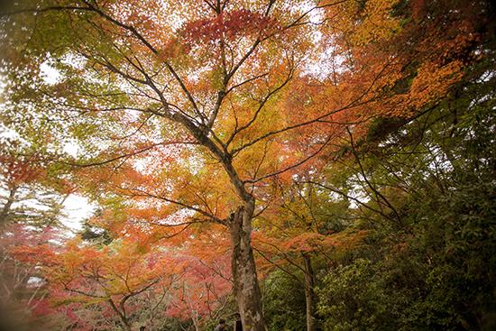 Momijidani Park Miyajima Japan autum