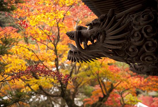 dragones en Japon Miyajima island