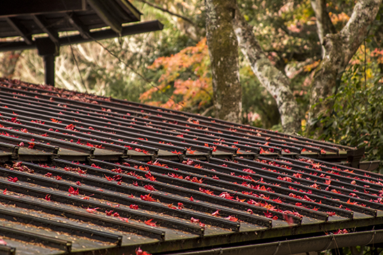 otoño en Miyajima isla Japon momijidani Park