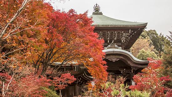 Daisho in temple vistas otoño Japon