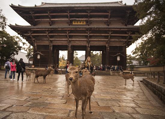 ciervos y Nandaimon gate en Nara
