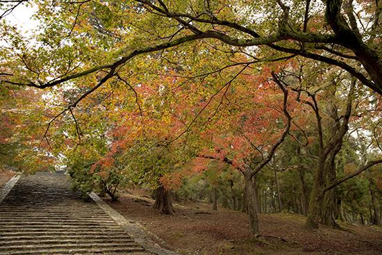 otoño en Nara Japón