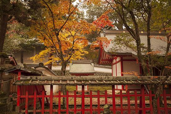 Nara Japan november