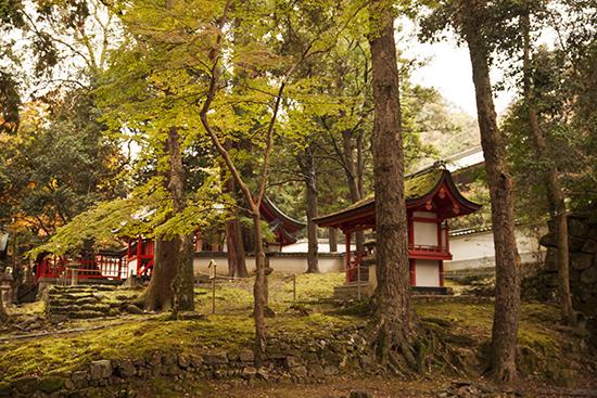 bosque Nara