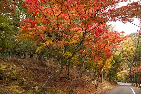 otoño momiji Nara noviembre Japon