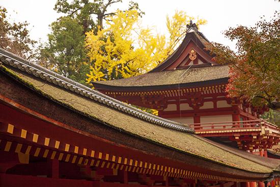 Nara en otoño Japón