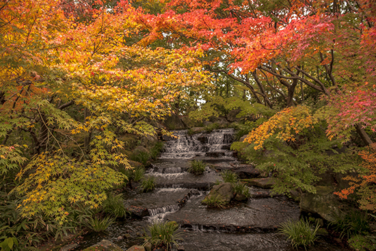 jardin japones en otoño