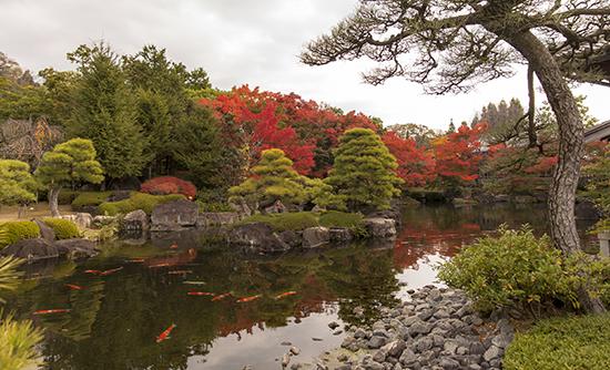 carpas en jardines japoneses