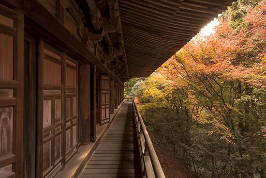 visitar en noviembre japon